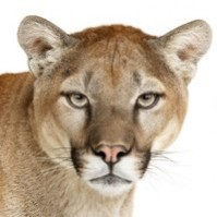 10.8 Mountain Lion