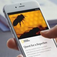 superbee-instant